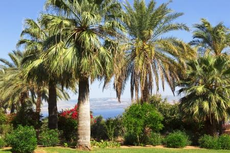 beatitude: Israel,Sea of Galilee,  Mount of Beatitudes, gardens  Stock Photo