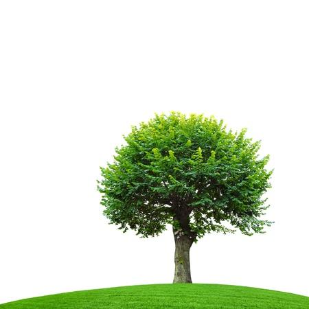 green season Stock Photo - 17882568