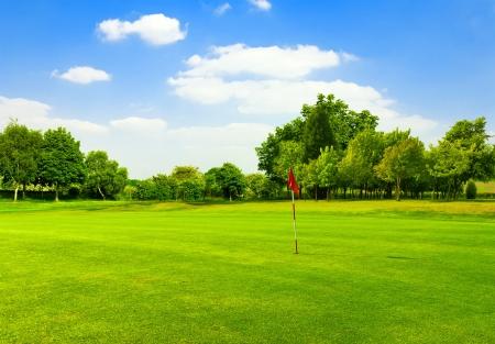 golf course: Perfect Green grass on a golf field