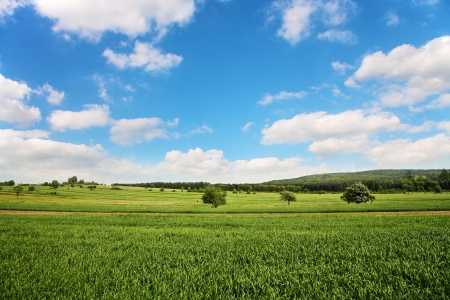 clearness: Field of wheat and perfect blue sky