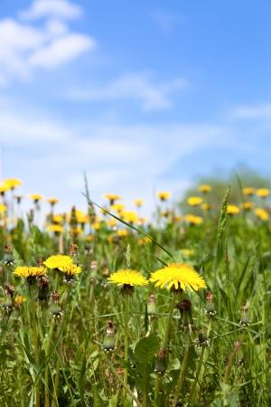 seasonic: Spring meadow