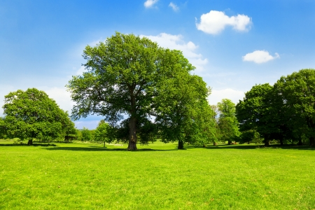 Green grass, tree and blue sky photo