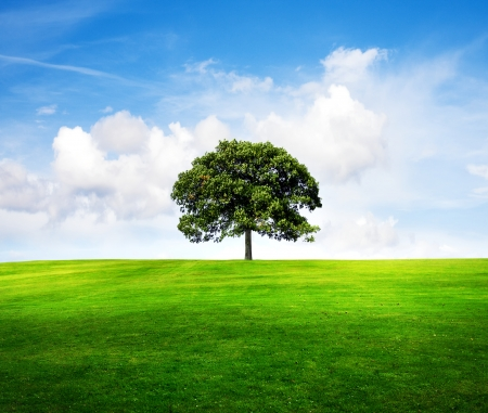 vacant: Field,tree and blue sky