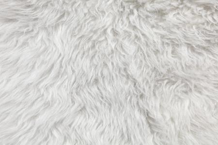 Wolle Hintergrund Detail der Schafspelz