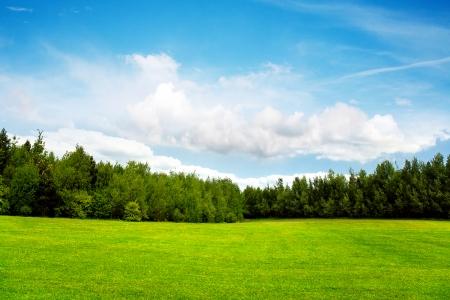 Alberi campo e cielo blu
