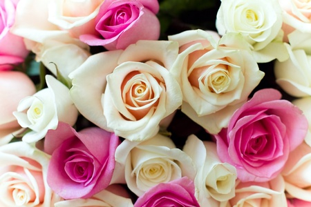 Beautiful colorful roses bouquet Stock Photo