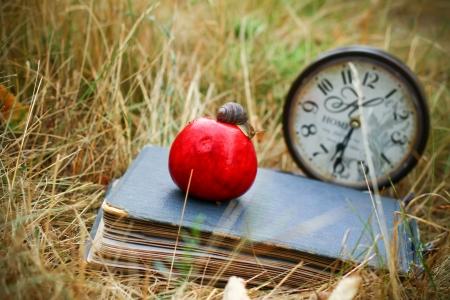 apple snail: book, clock, apple snail lay on dry grass