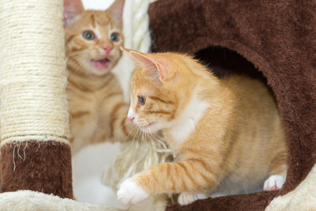 Cute kittens playing on a cat tree