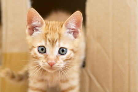 seeding: Cute red kitten playing