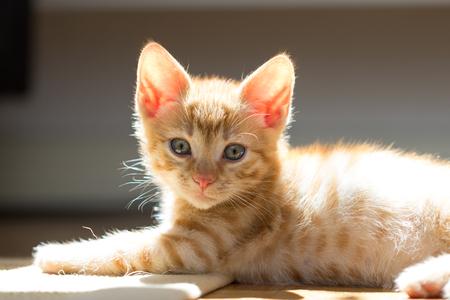 Cute little kitten Stock Photo