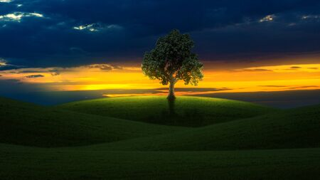 Tree on a hill at sunrise