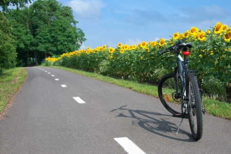 Bike on the bike trail with a field of sunflowers. photo