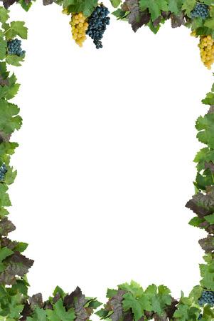 Cornice bianca con uva e foglie del vigneto.