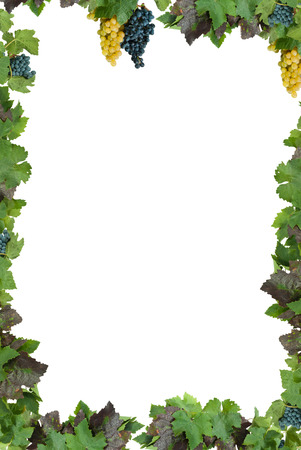 White frame with grapes and leaves of the vineyard.