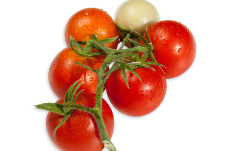 be soggy: Heathland tomatoes ripen in the greenhouse in organic farming.