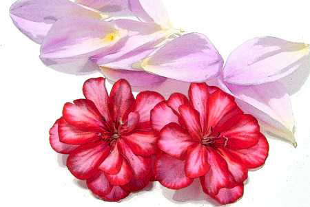 Illustration of red flowers with pink petal leaves. illustration