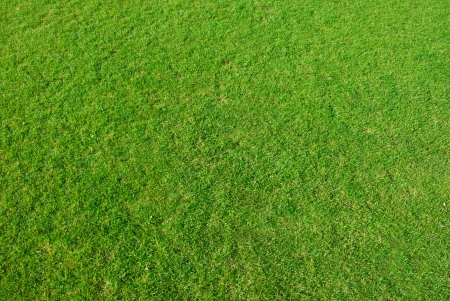 detail of green grass photographed as background photo