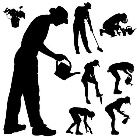woman gardening: Vector silhouette of a gardener on white background.  Illustration