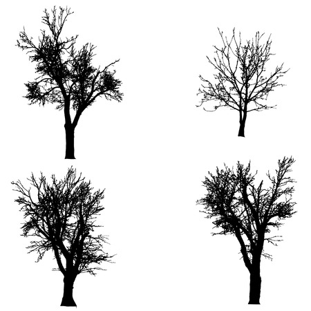 Vector silhouette of tree on a white background. Vector