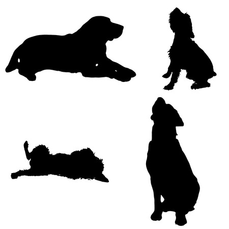 schnauzer: Vector silhouette of a dog on a white background.