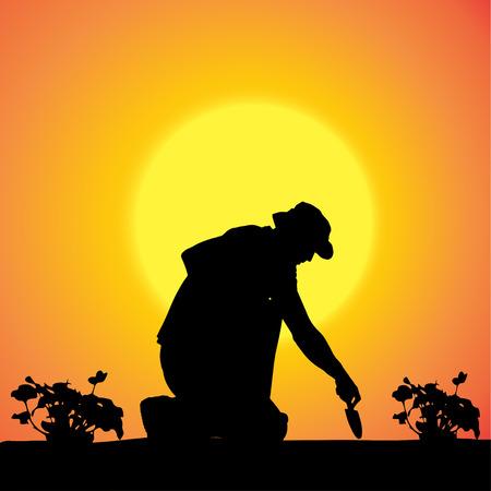Vector silhouette of a gardener in the garden at sunset. Vector