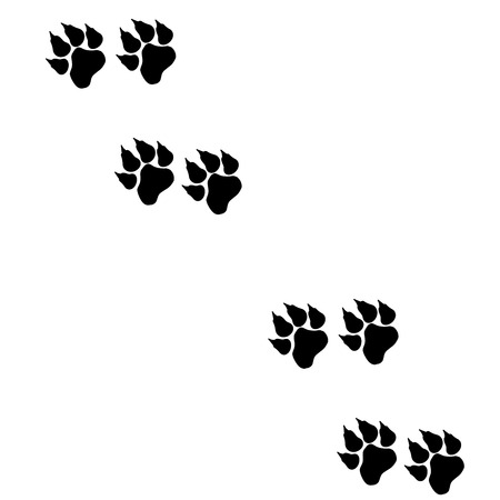 Vector image of paws on a white background. Vector