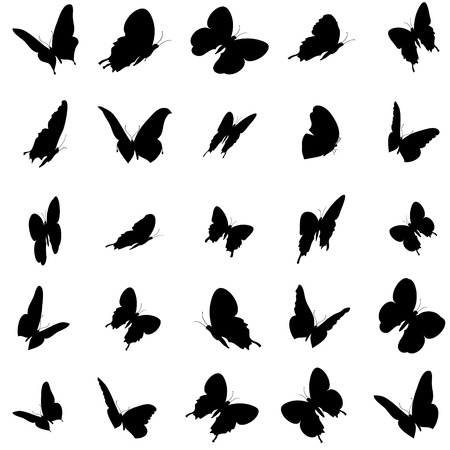 butterfly silhouette: Vector illustration of butterflies on a white background. Illustration