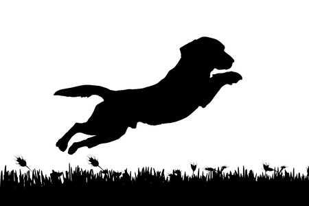 jumps: Vector silhouette of a dog in nature.