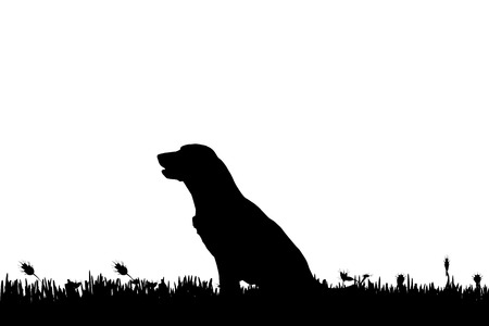 game dog: Vector silhouette of a dog in nature.