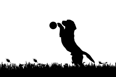 funny dog: Vector silhouette of a dog in nature.