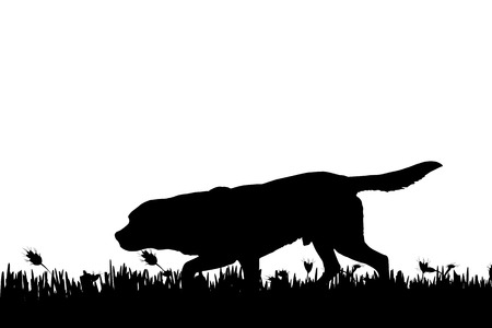 sniff: Vector silhouette of a dog in nature.