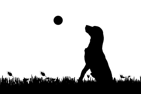 Vector silhouette of a dog in nature. Vector