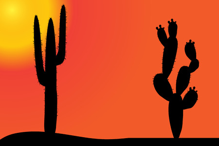 saguaro: Vector silhouette of cactus in the desert at sunset.