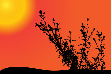 flower fields: Vector silhouette of a meadow grass at sunset.