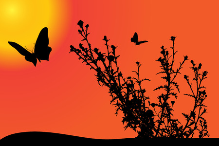 nature silhouette: Vector nature silhouette with butterfly at sunset. Illustration