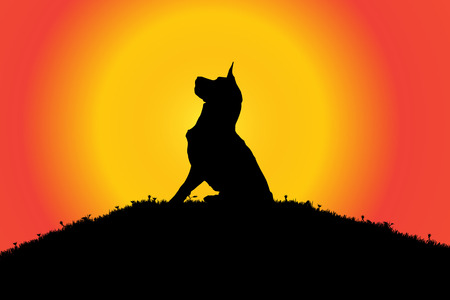 silhouette dog: Vector silhouette of a dog in nature.
