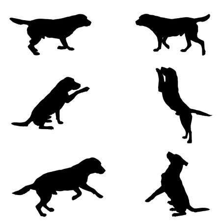 buddies: Black silhouette of dogs on white  background.