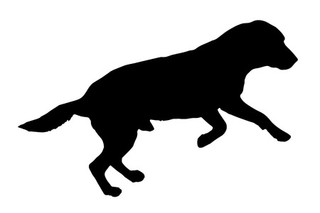 labrador puppy: Vector silhouette of a dog on a white background.