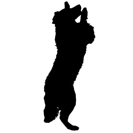 catch: Vector silhouette of a dog on a white background.