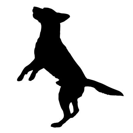 beg: Vector silhouette of a dog on a white background.