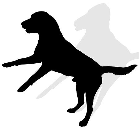 companions: Vector silhouette of a dog on a white background.