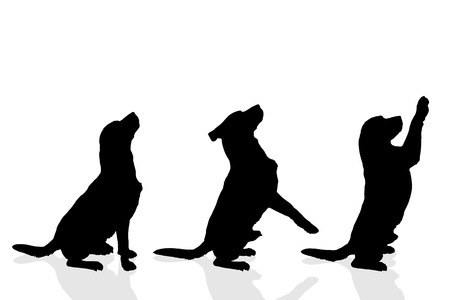 dancing silhouettes: Vector silhouette of a dog on a white background.