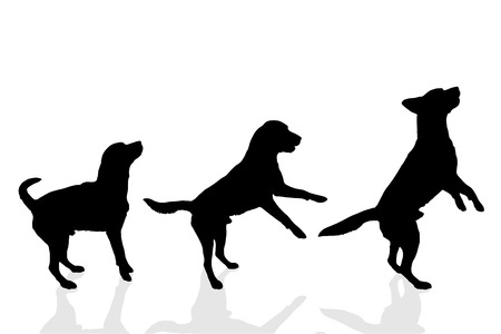 白い背景の上の犬のベクトル シルエット。