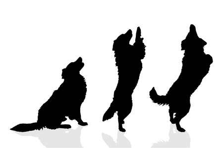 silhouette sign: Vector silhouette of a dog on a white background.