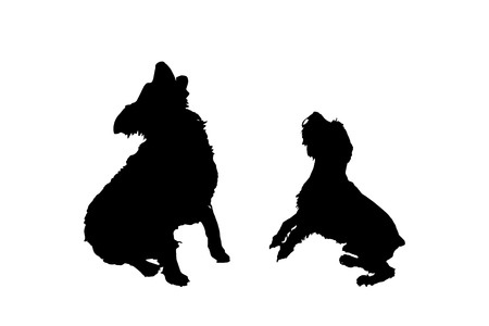 canine: Vector silhouette of a dog on a white background.