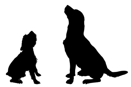 labrador: Vector silhouette of a dog on a white background.