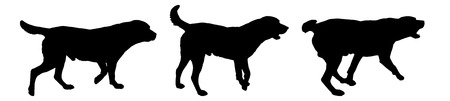 dog run: Vector silhouette of a dog on a white background.