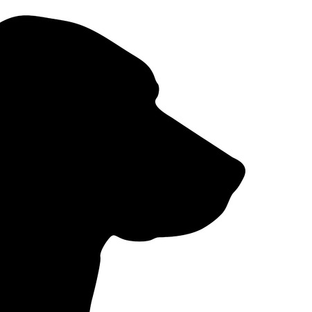 labrador: Vector illustration of dog on a white background.