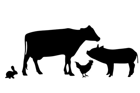 animal silhouette: Vector silhouette of farm animal on white background.