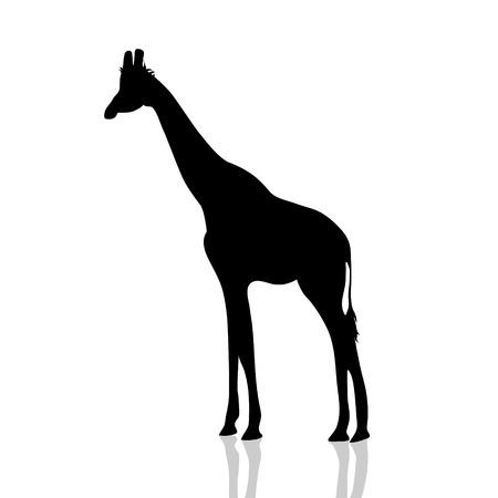 Vectorillustratie van een giraf op witte achtergrond. Vector Illustratie
